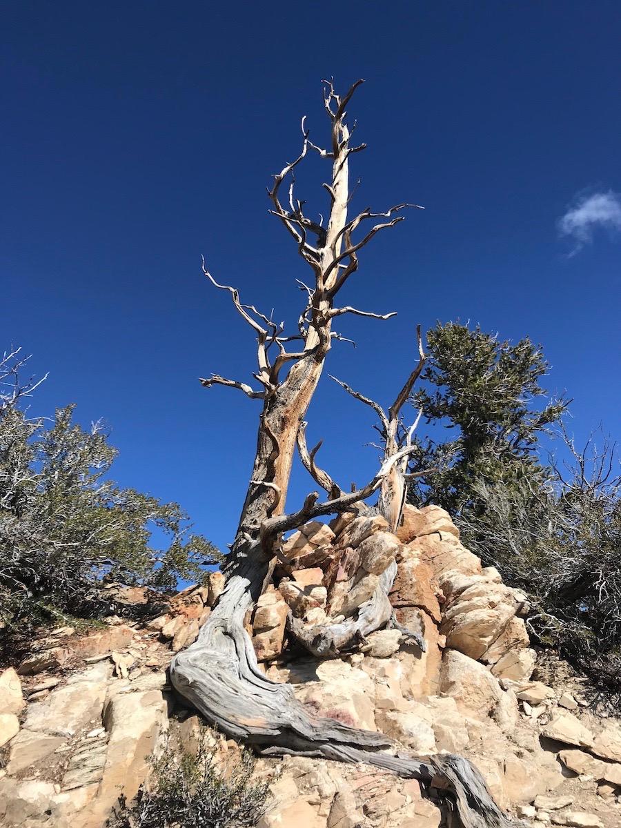Name:  dead tree.jpg Views: 5773 Size:  393.6 KB