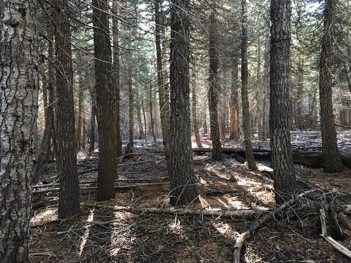 Name:  hike dead trees.jpg Views: 5228 Size:  625.9 KB