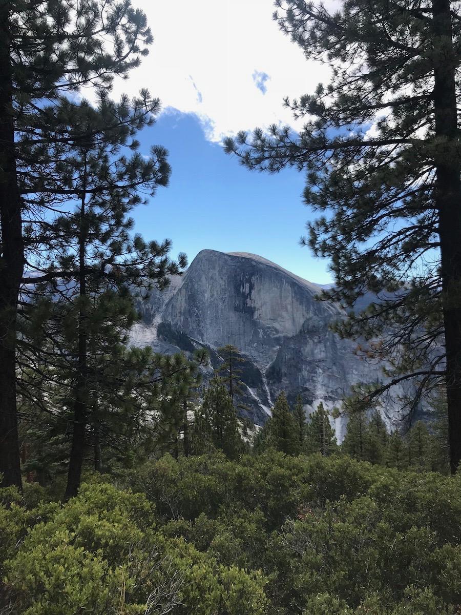 Name:  half dome trees.jpg Views: 5188 Size:  518.4 KB
