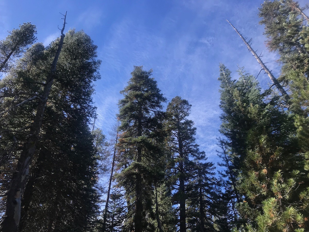 Name:  trees and sky.jpg Views: 5273 Size:  502.7 KB