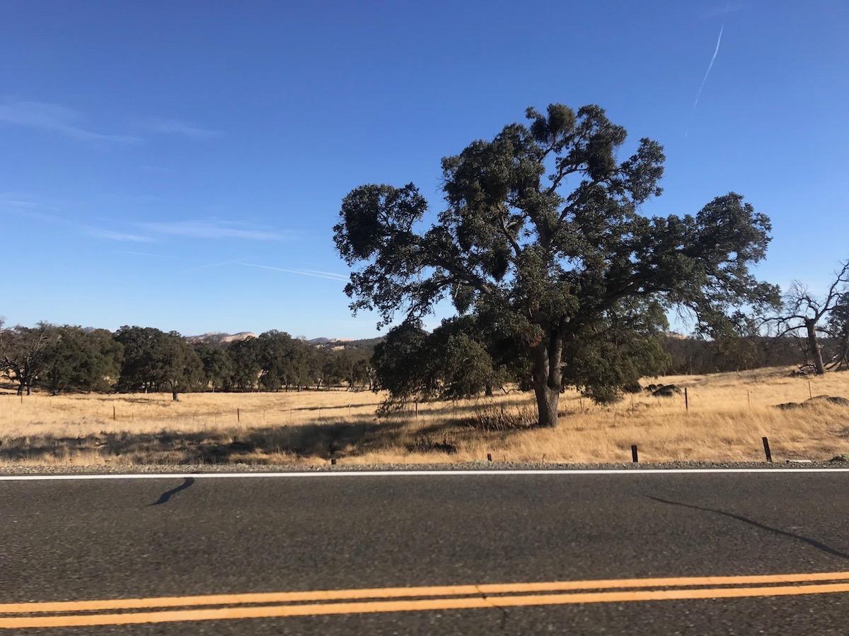 Name:  oak trees.jpg Views: 4938 Size:  347.8 KB